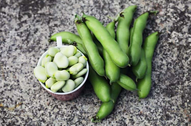 growing pinto beans from seed