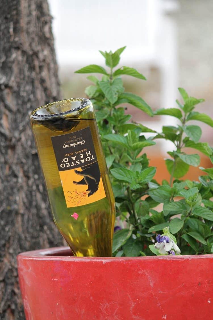 Self-watering Planter using a wine bottle