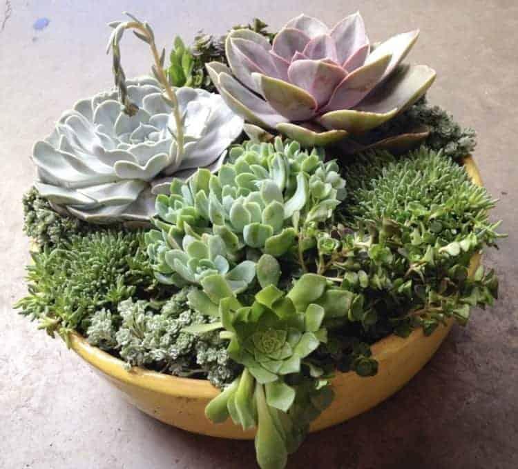 diy succulent planter ideas