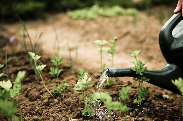 gardening quotes ideas