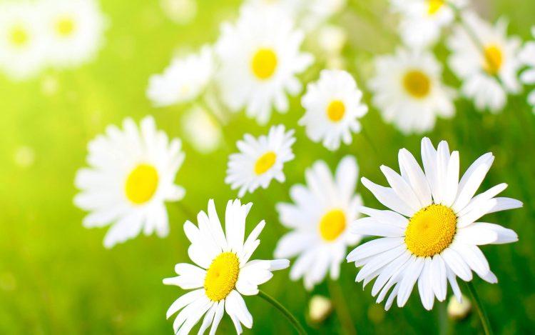 common types of flower
