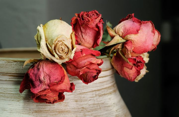 Tips How to Dry Flowers