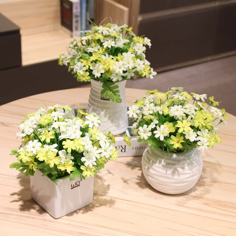 How to Plant Common Mums Indoor
