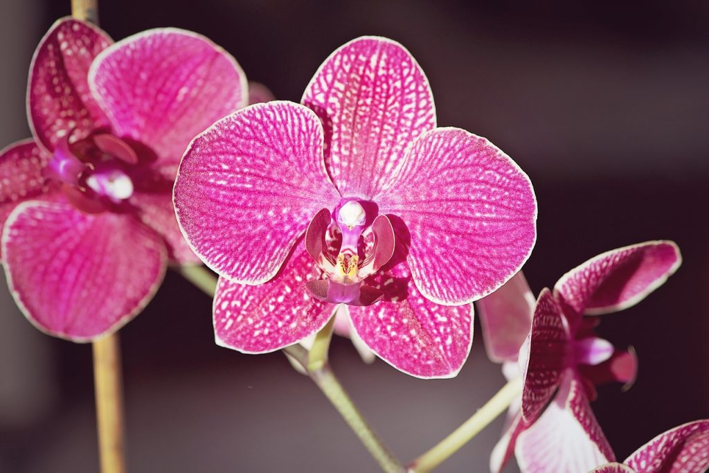 Orchid Flower Color Meaning and Symbolism