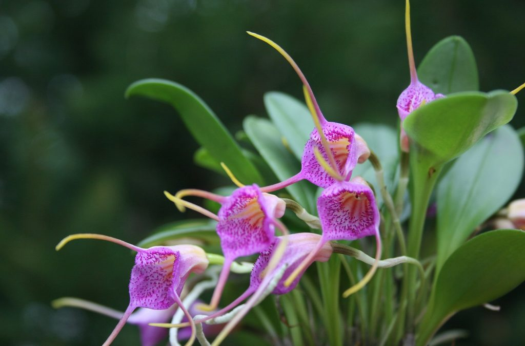 Types of Petite Orchids