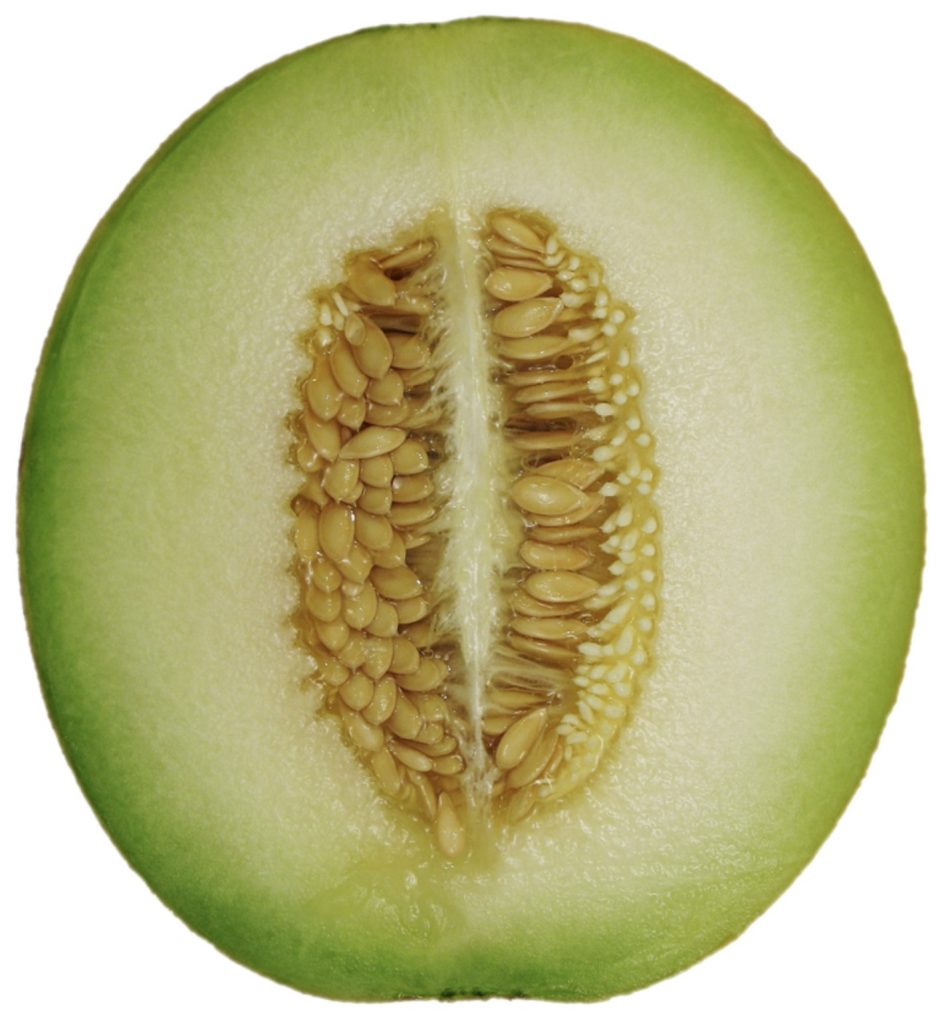 bailan melon