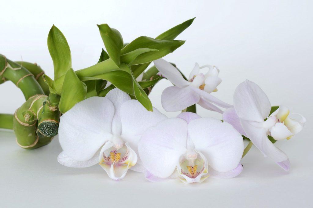 beginner orchids