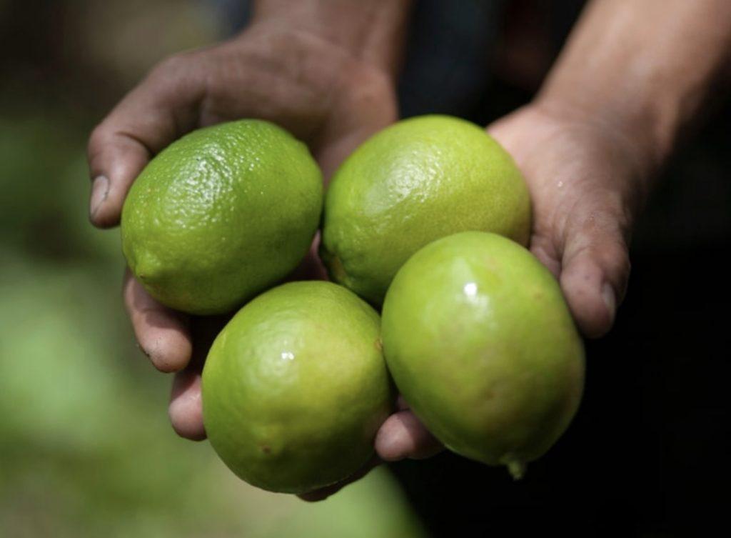 Dorshapo Lemons