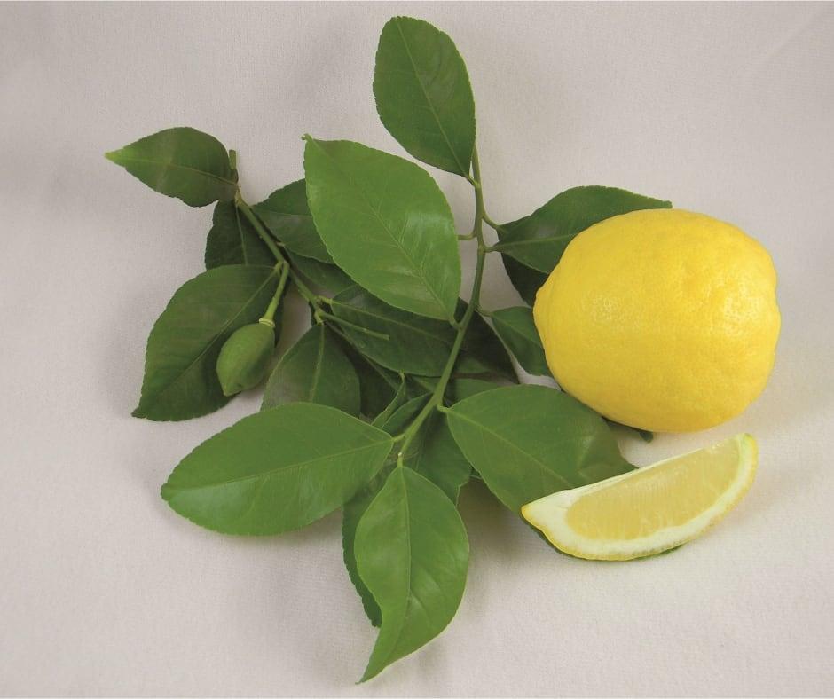 Villafranca Lemons